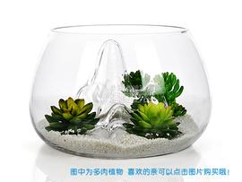 出口美国 透明山水缸玻璃鱼缸客厅小型 创意金鱼缸客厅懒人鱼缸