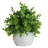 Nordic ins simulation plant fake grass small potted anti-eucalyptus living room decoration interior decoration green plant ornaments