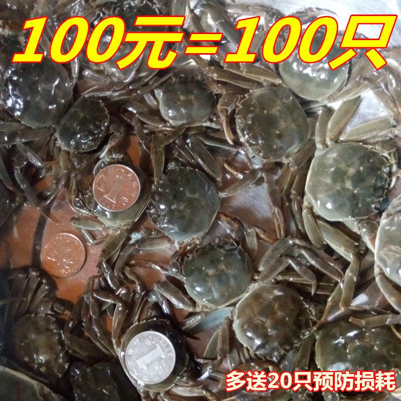徽周六月黄100只装香辣蟹1一元蟹小螃蟹鲜活大闸蟹河蟹麻辣小闸蟹