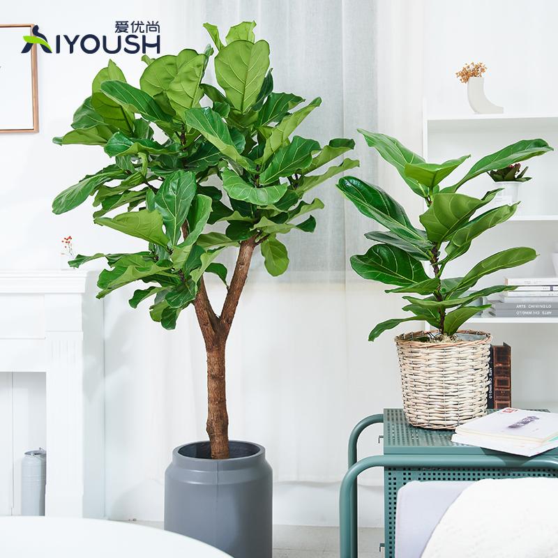 爱优尚琴叶榕盆栽大叶植物室内客厅办公室
