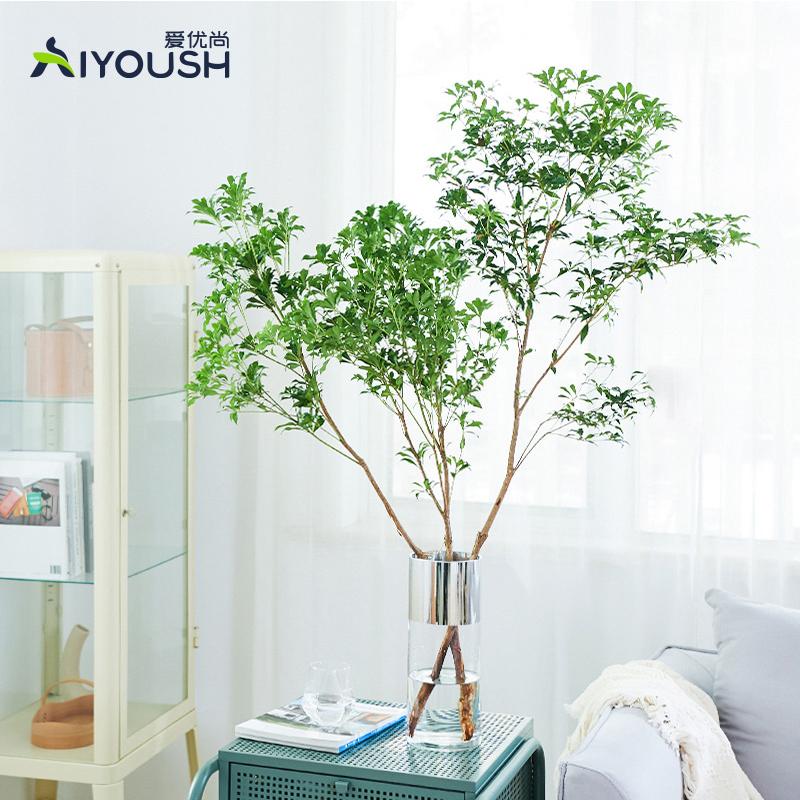 马醉木日本进口水培吊钟植物鲜切枝条室内客厅水养绿植花卉北欧风