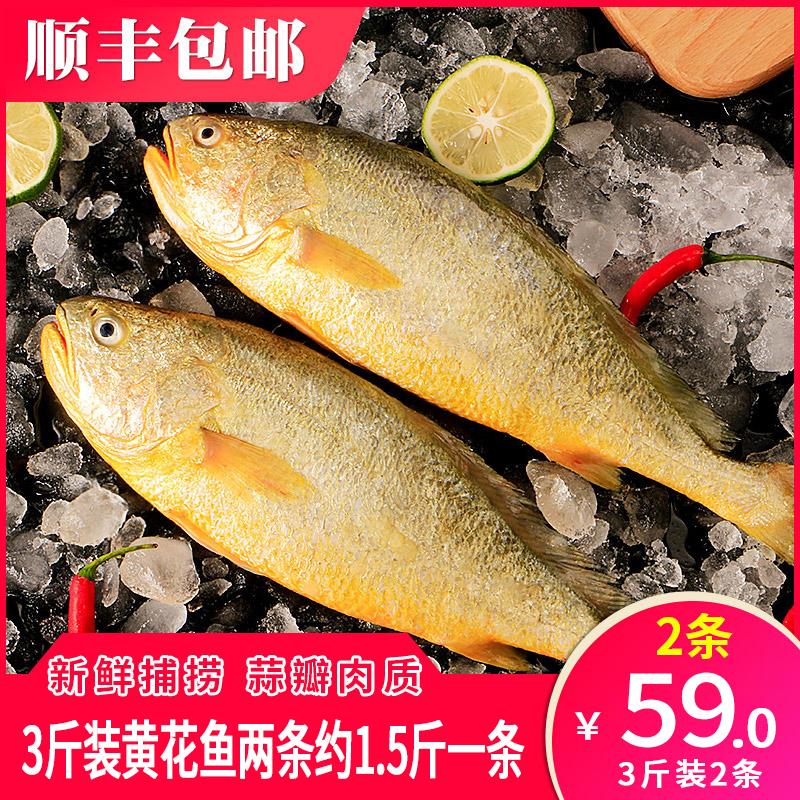 3斤装2条新鲜大黄花鱼冷冻生鲜真空包邮深海海鲜水产鲜活冰鲜海鱼