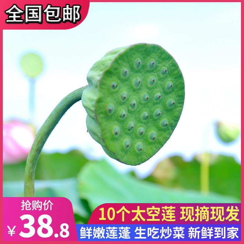 刘小鲜 新鲜现摘莲蓬 10个 天猫优惠券折后¥13.8包邮(¥38.8-25)