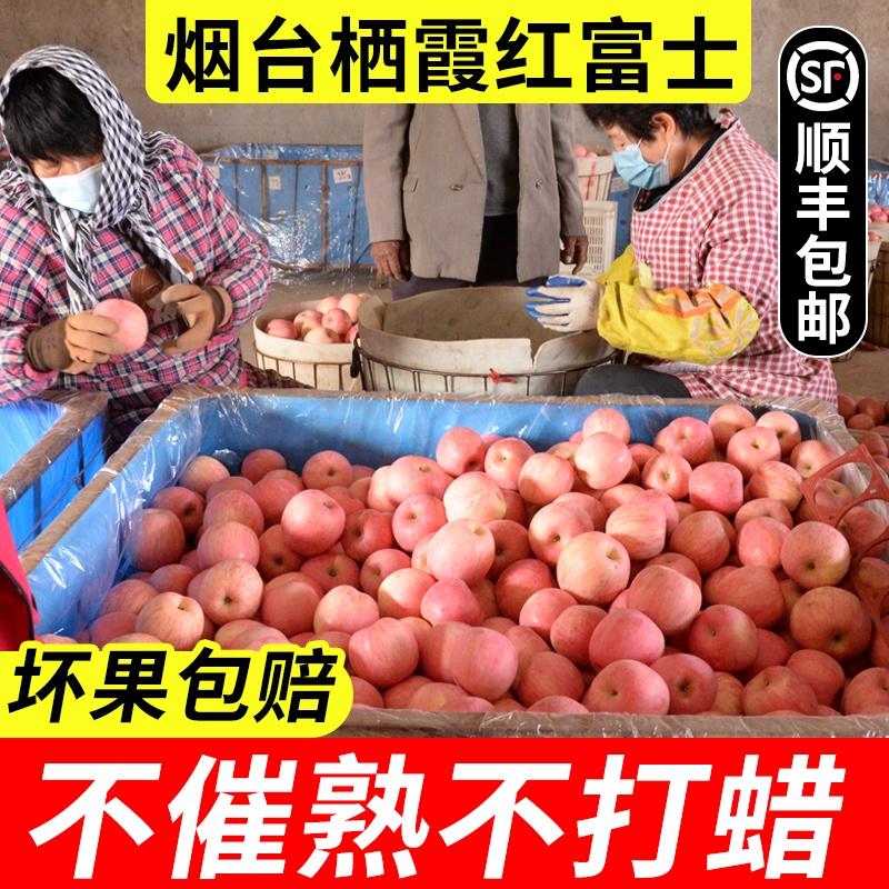 山东烟台苹果栖霞红富士水果新鲜脆甜当季现摘5斤10斤平安果包邮