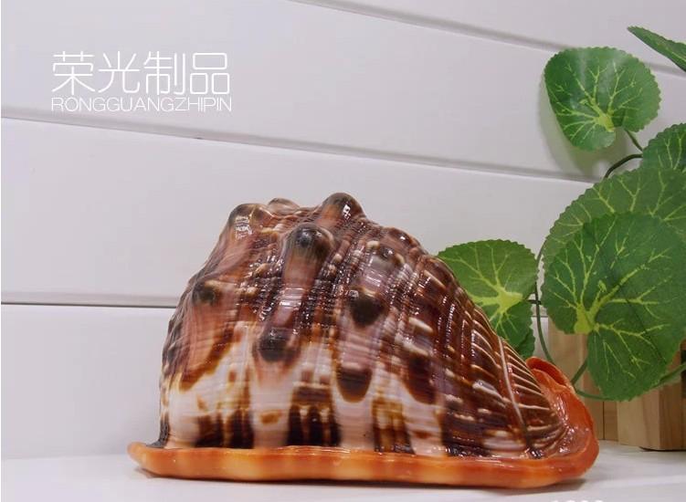 大海螺精选超大天然海螺贝壳万宝螺四大名螺家居装饰摆件贝壳海螺