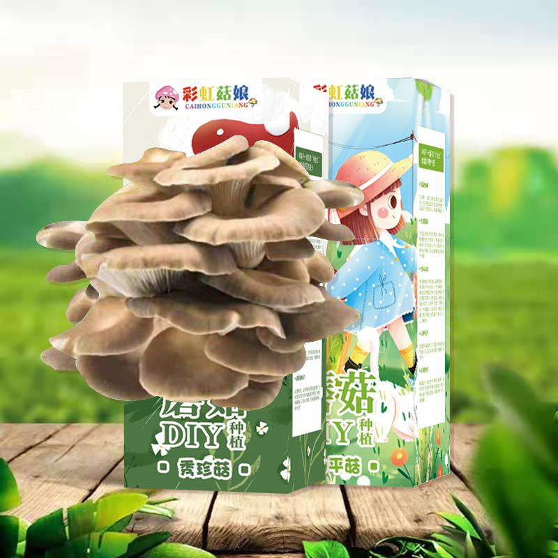 彩虹菇娘蘑菇种植包