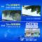汽车玻璃水固体泡腾片车用雨刷精雨刮器超浓缩液强力去污四季通用