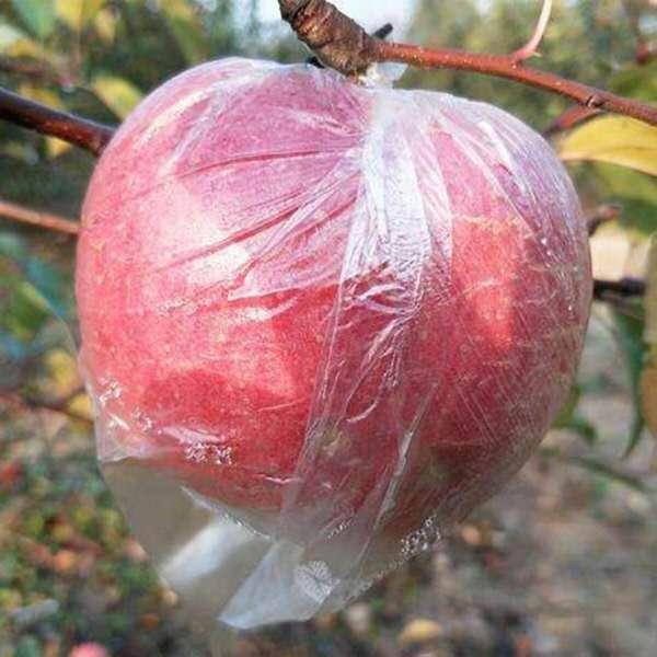 新鲜脆甜当季精品运城红富士冰糖心大苹果水果10斤批带箱顺丰包邮