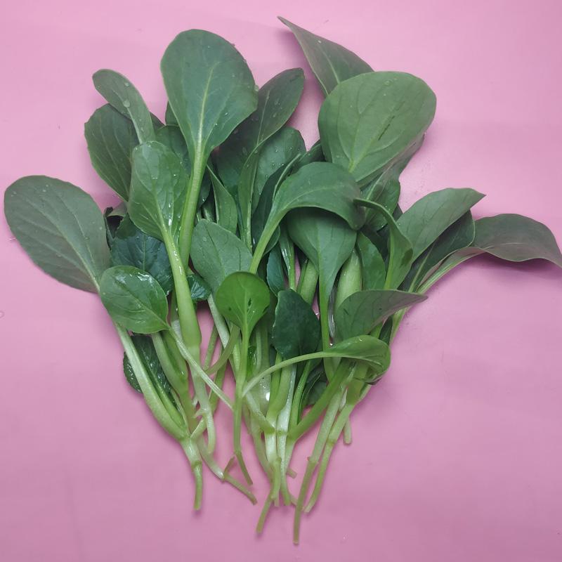 青优鸡毛菜种子青菜小油菜籽速生小白菜青梗菜蔬菜种子四季播易种