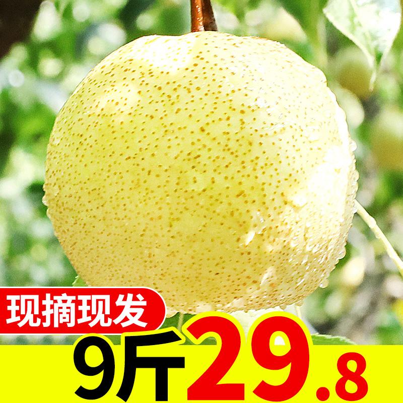 梨子水果新鲜当季9斤批发应季香青梨翠梨砀山梨翠冠鸭梨包邮