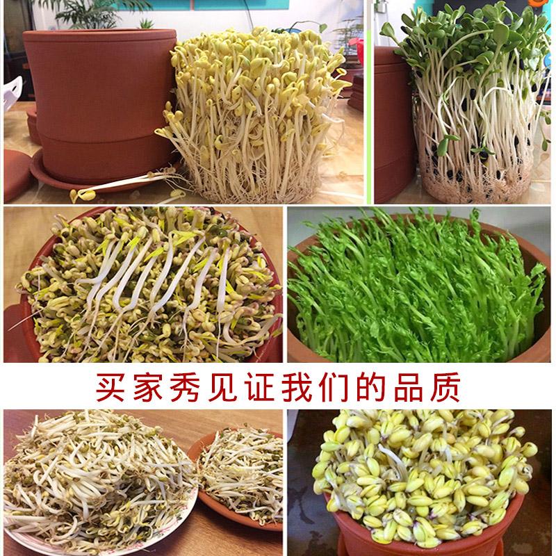 发豆芽机家用生豆芽罐种植盆芽苗菜育苗盘土陶紫砂麦饭石自制神器