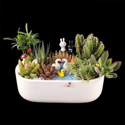 多肉植物组合盆栽套餐桌面绿植防辐射 diy创意礼品苔藓微景观包邮