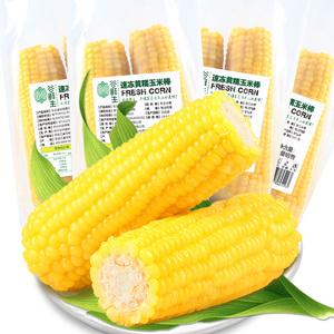 黑龙江鲜甜黄糯玉米8穗