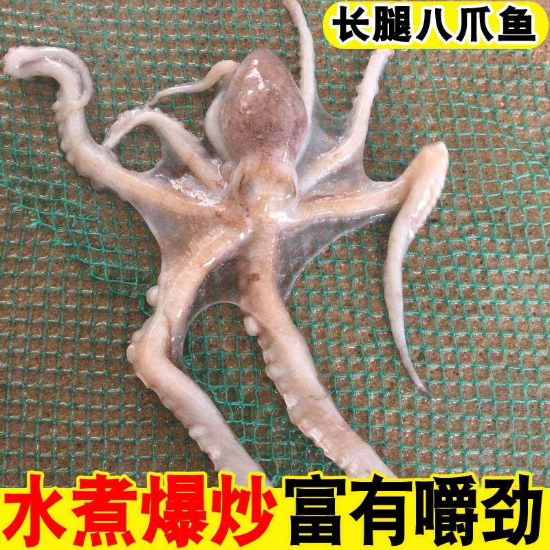 海鲜水产鲜活长腿八爪鱼新鲜网红大爆头八爪鱼野生大章鱼大八抓鱼