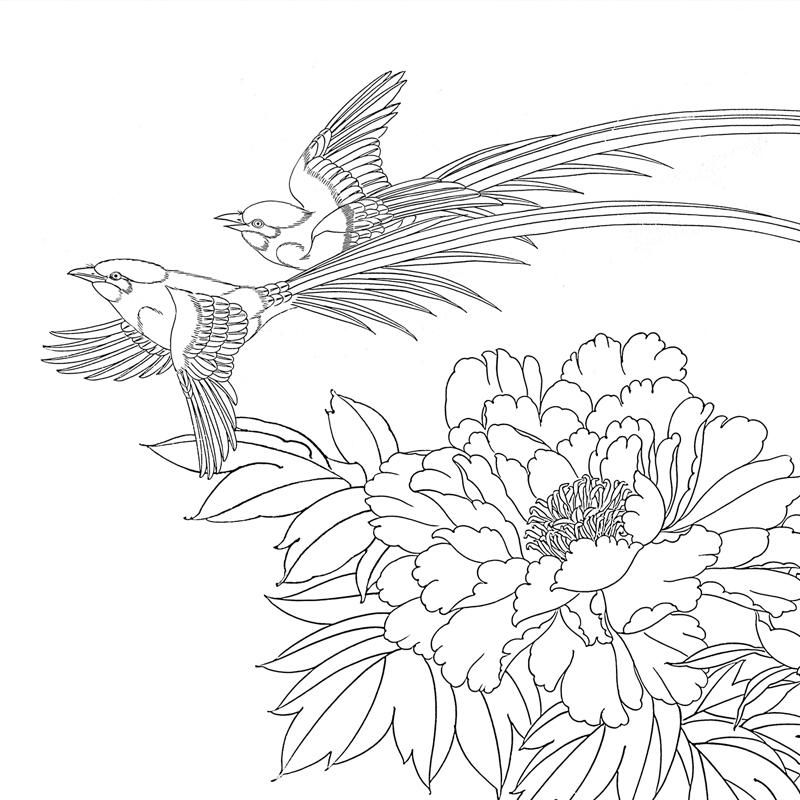 工筆畫打印白描底稿鄭玲玲橫幅花鳥文字說明步驟圖初學者臨摹線稿