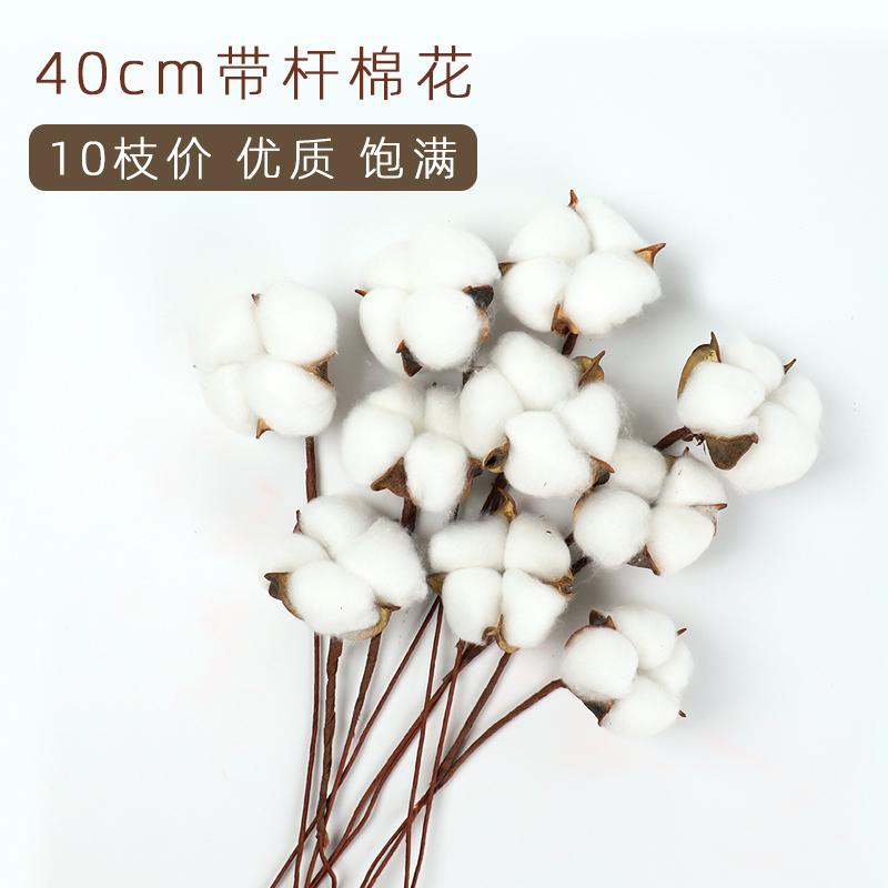 天然棉花头干花真花大号自带铁丝杆40cm花束装饰材料鲜花辅料配件