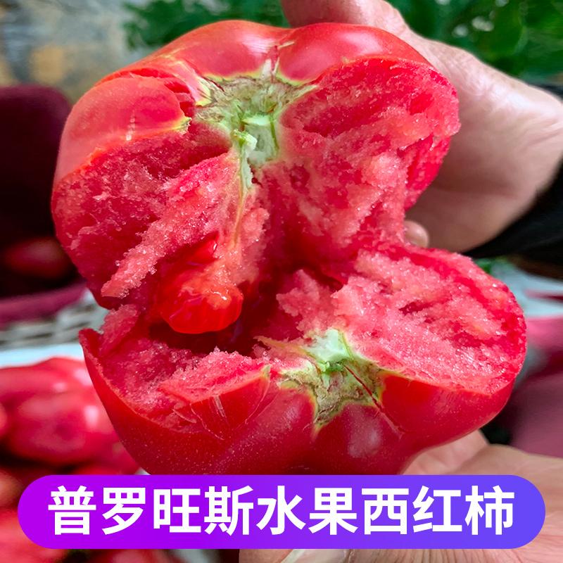 普罗旺斯西红柿新鲜自然熟水果番茄沙瓤生吃西红柿圣女果5斤