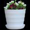 环保塑料花盆植物圆仿陶瓷彩色横纹糖果色大号创意多肉盆10元包邮
