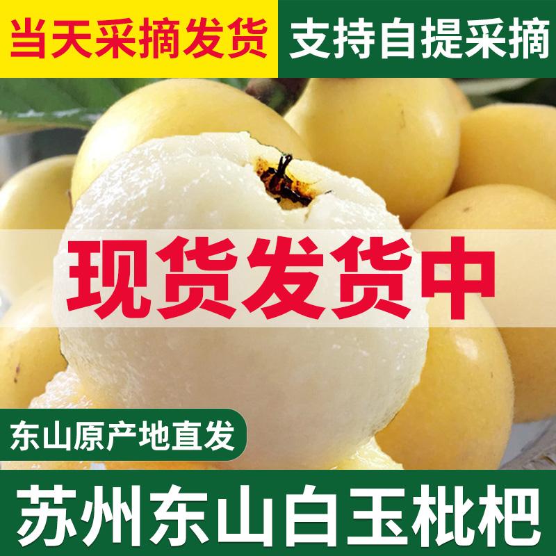 超甜苏州东山白玉白沙枇杷果新鲜水果5斤非塘栖米易当季礼盒琵琶