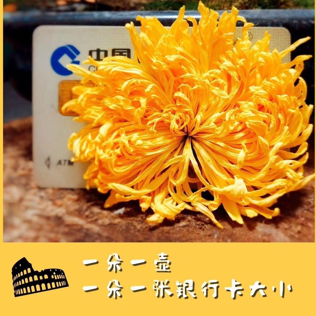 券后5.1元  金丝皇菊菊花茶