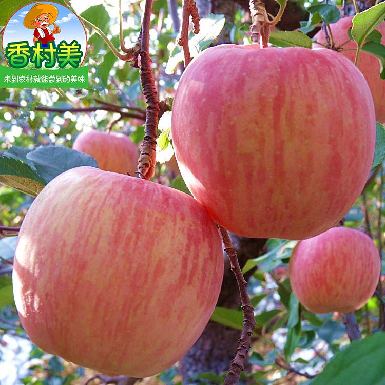 【今日特价】陕西苹果水果10斤整箱吃的脆甜大现摘新鲜红富士批发