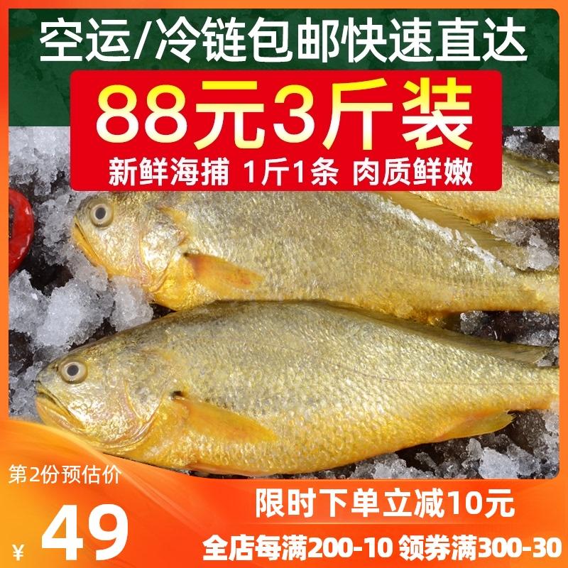 黄花鱼海捕黄鱼新鲜海鱼海鲜水产海鱼鲜活冷冻海鱼深海黄花鱼