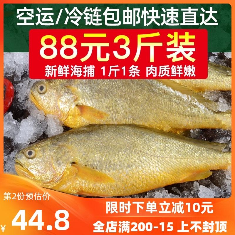 黄花鱼海捕黄鱼新鲜海鱼海鲜水产海鱼鲜活冷冻海鱼深海黄花鱼生鲜