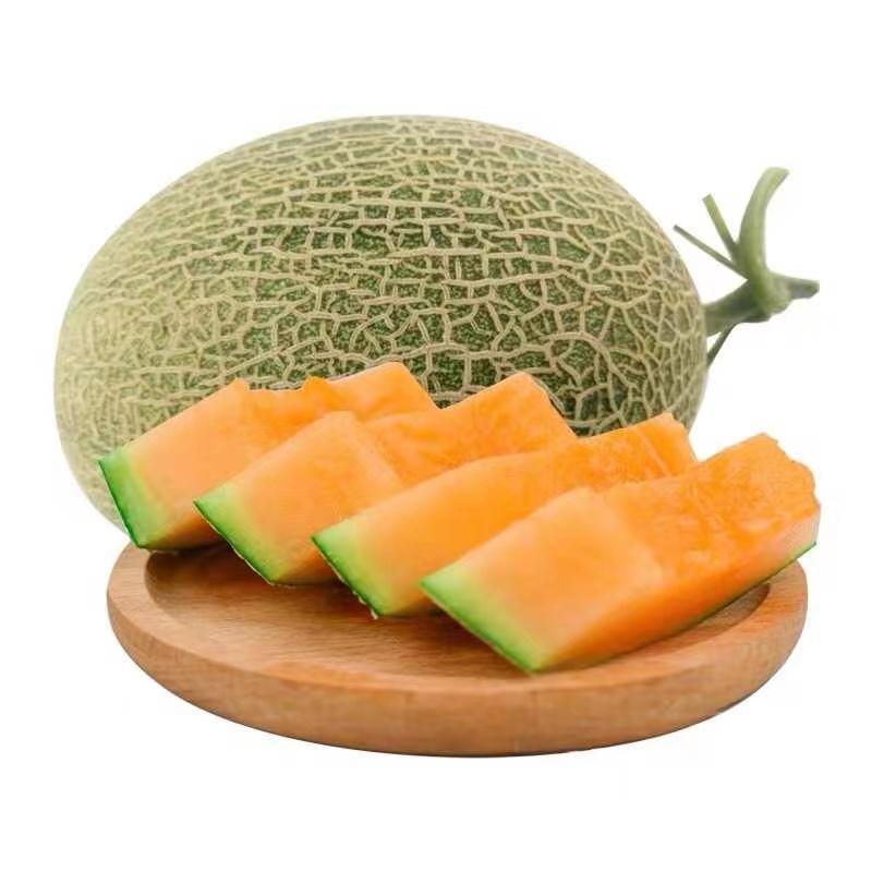 山东哈密瓜西州蜜甜网纹瓜大瓜3斤应当季新鲜水果一箱批发包邮10
