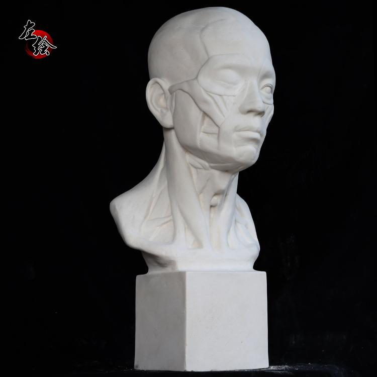 美术 石膏教具 石膏像 石膏头像 解剖头像2 肌肉头 57CM 雕塑摆件