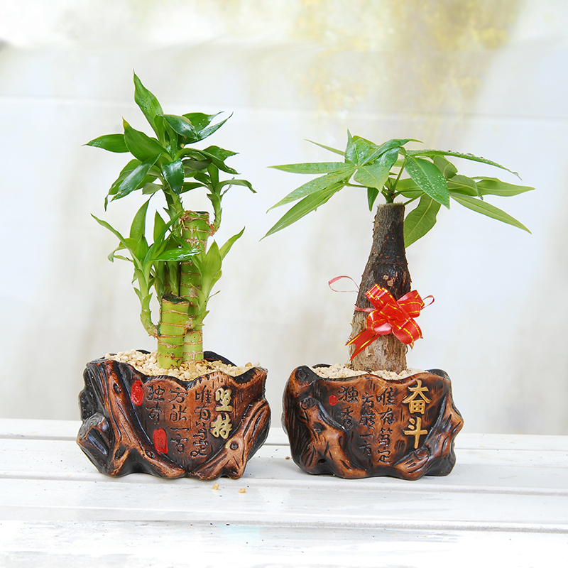 Buy Ceramic Pots Combination Of Potted Plants Insisted Struggle