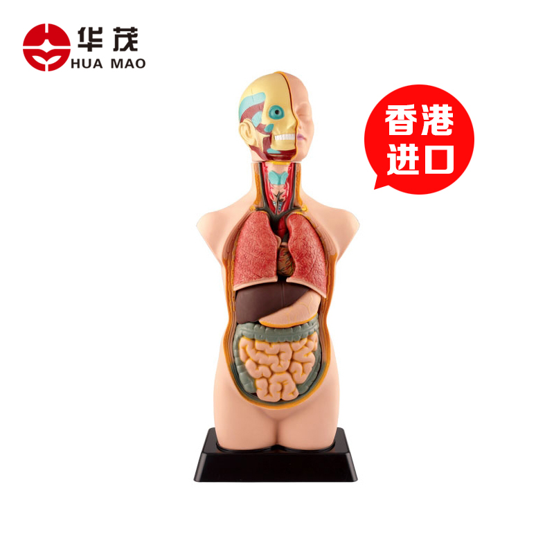 Buy Huamao Science Of Human Organs Disassembly Assembled Medical