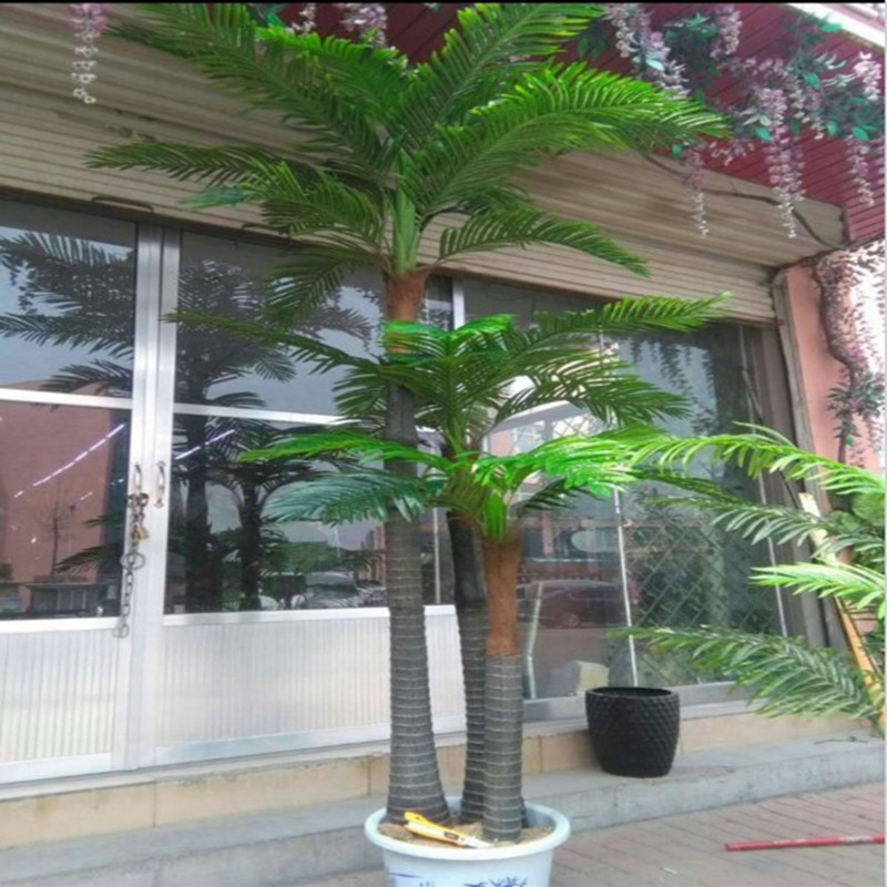 Buy Large indoor and outdoor tropical landscape tree plant ...