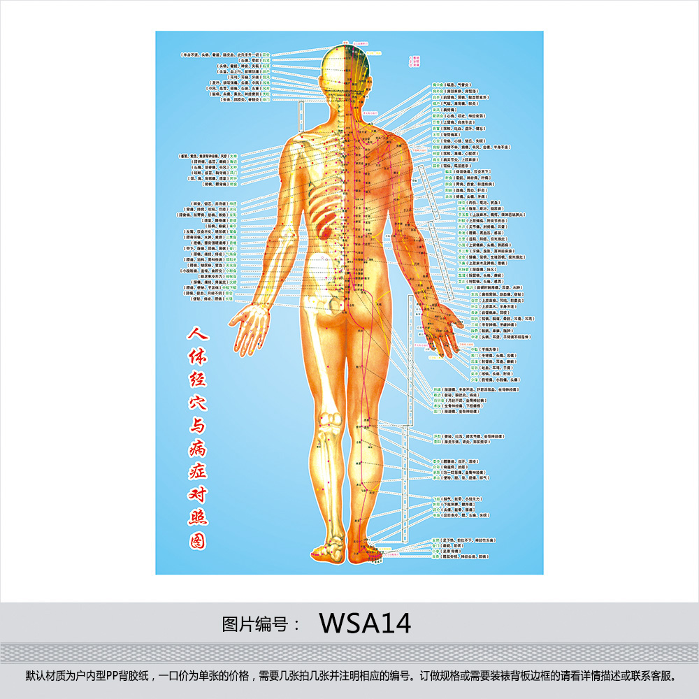 Made Of Human Body Acupuncture Points Chart Flipchart Poster Meridian And Disease Control Diagram Klimts Wsa14 In Price On
