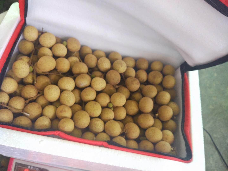 龙眼新鲜水果5斤广东高州特大桂圆储良石硖当季水果现摘现发空运