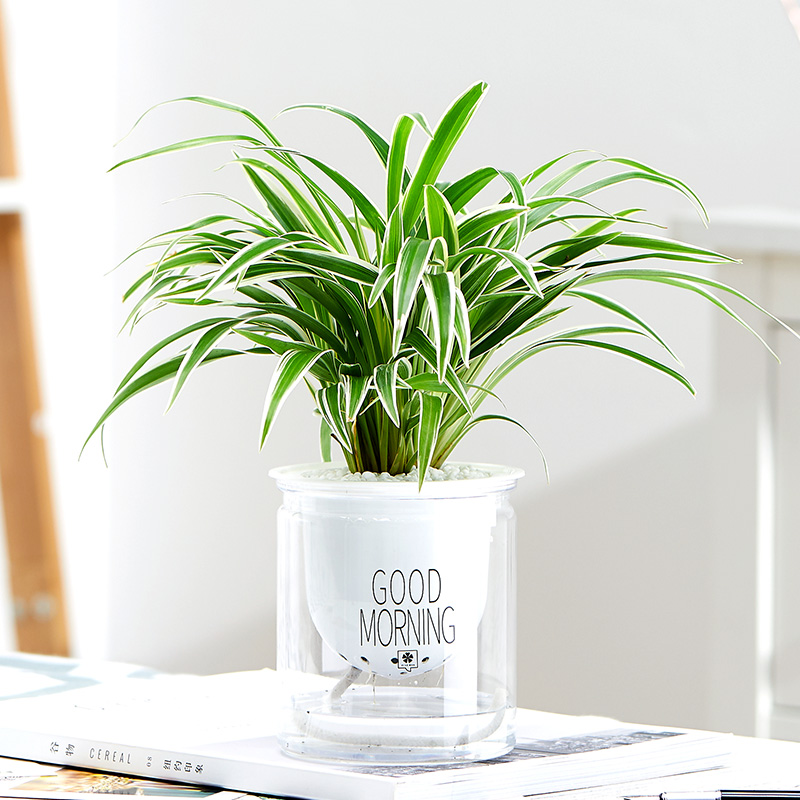 发财树栀子花花卉盆栽植物室内吊兰绿萝办公室绿植芦荟多肉长寿花