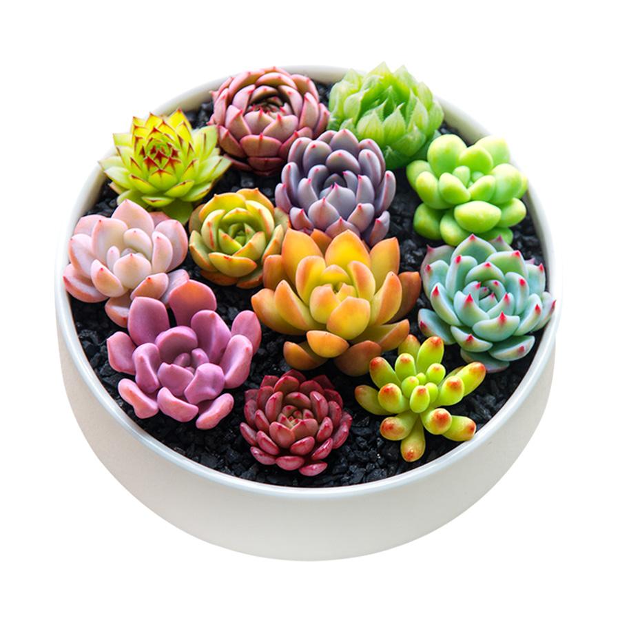 多肉植物种植新手套餐肉肉植物多肉组合盆栽绿植花卉送花盆送土