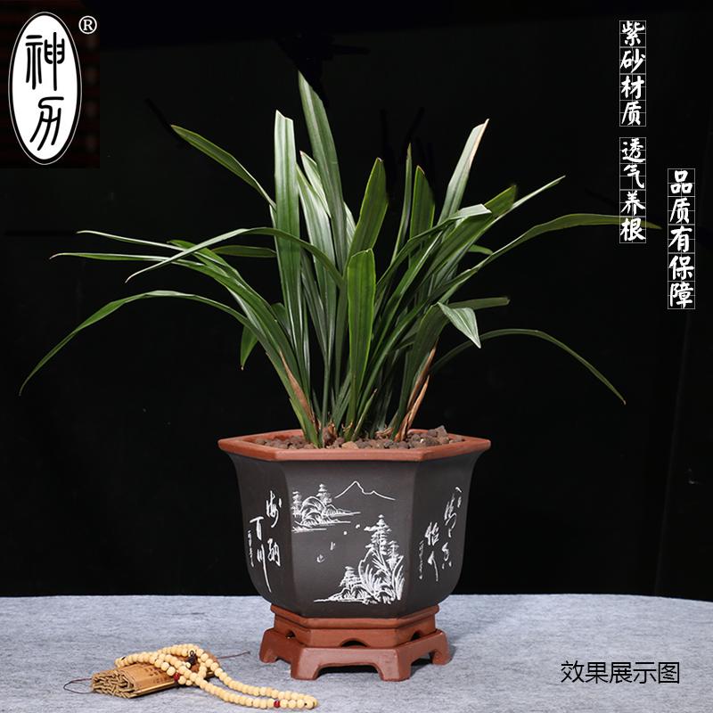 神力紫砂花盆陶瓷兰花盆盆景盆简约个性多肉花盆绿萝 君子兰花盆