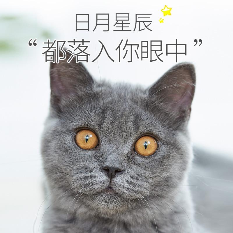 猫粮成猫英短蓝猫折耳营养天然粮去泪痕通用型全价宠物成年猫粮优惠券