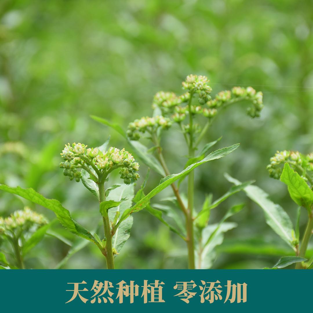正品特级野生转氨酶养生茶益肝非溪黄草 500g 四川古蔺赶黄草叶
