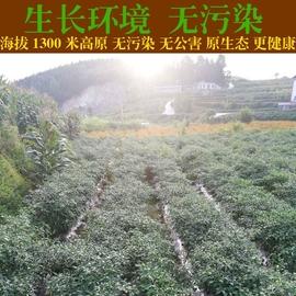 贵州新鲜红辣椒泰椒朝天椒指天椒农家剁辣椒蔬菜椒5斤装非小米椒