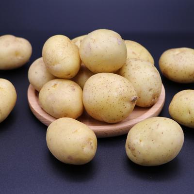 三玄 现挖新鲜蔬菜马铃薯恩施小土豆农家自种高山黄心湖北洋芋5斤