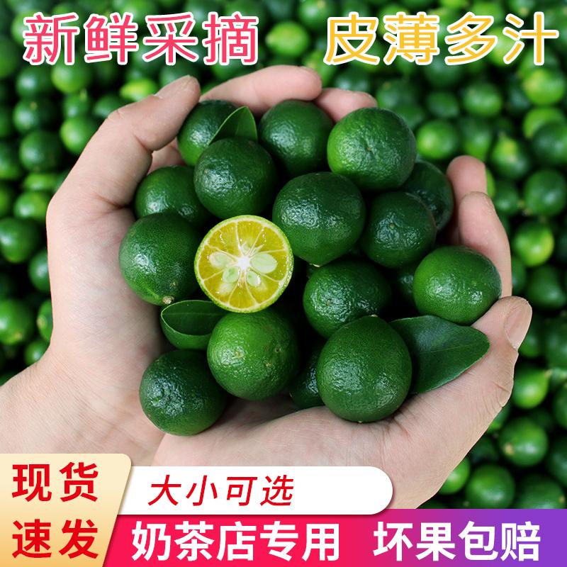 海南小金桔新鲜绿青桔皮薄多汁酸青柠奶茶店专用水果5斤包邮批发
