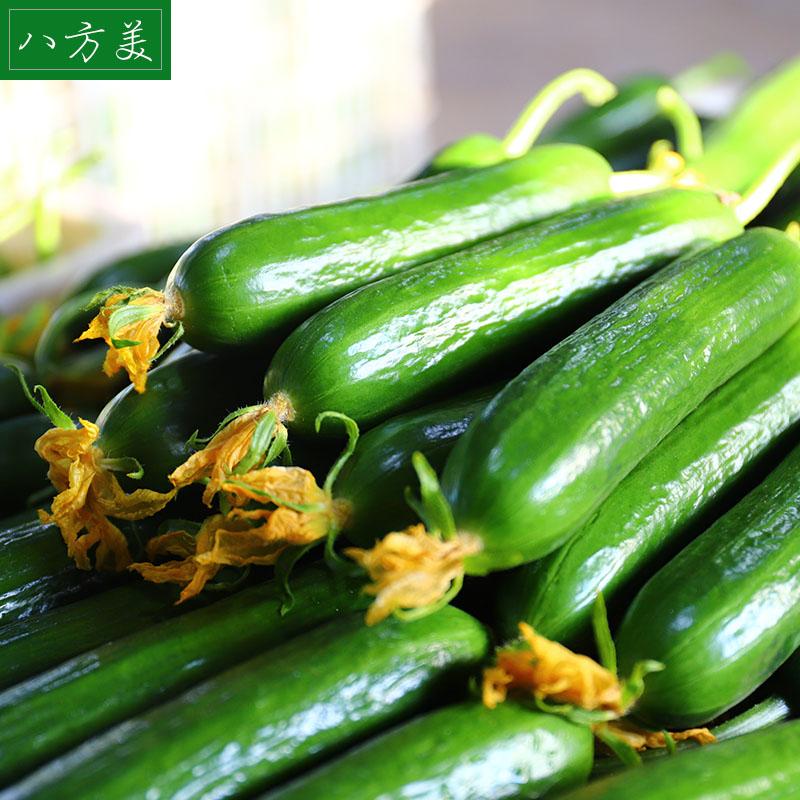 八方美 新鲜水果黄瓜荷兰无刺青瓜蔬菜生吃小黄瓜现摘现发5斤