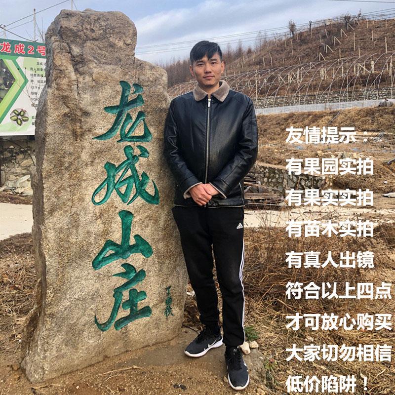 软枣猕猴桃苗丹东龙成二号四季果树东北圆枣子盆栽南北方
