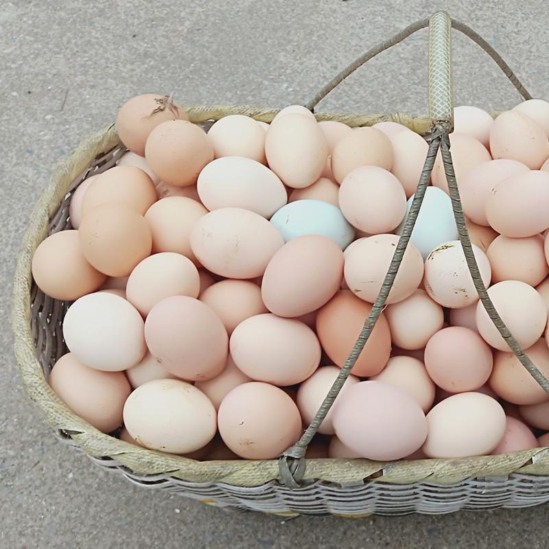 正宗土鸡蛋农家散养新鲜农家村民自养天然40枚草鸡蛋柴鸡蛋本笨鸡