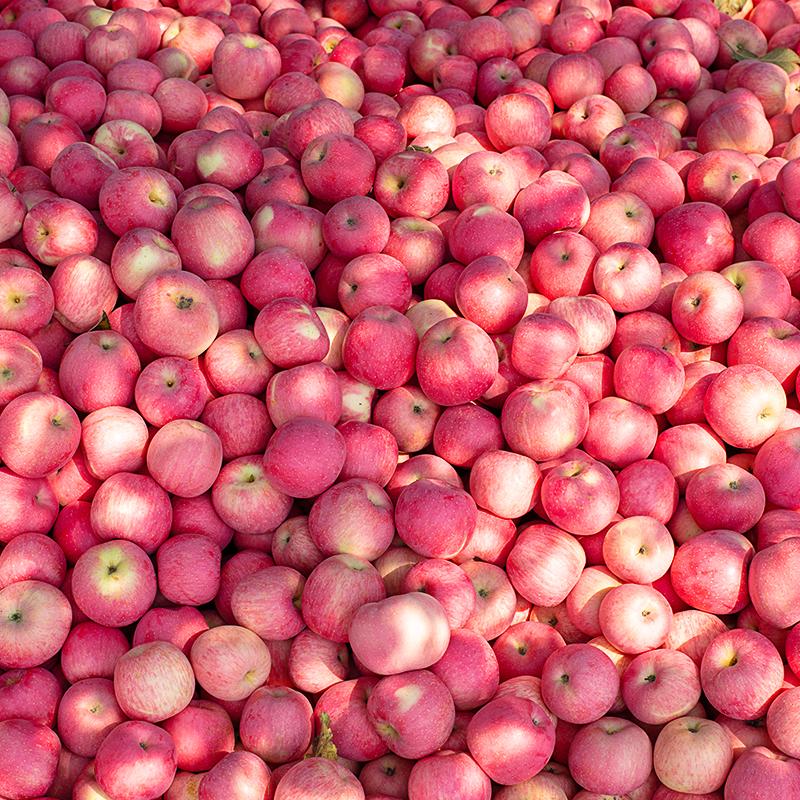 陕西红富士苹果新鲜水果10斤当季整箱批发应季糖心丑苹果脆甜包邮