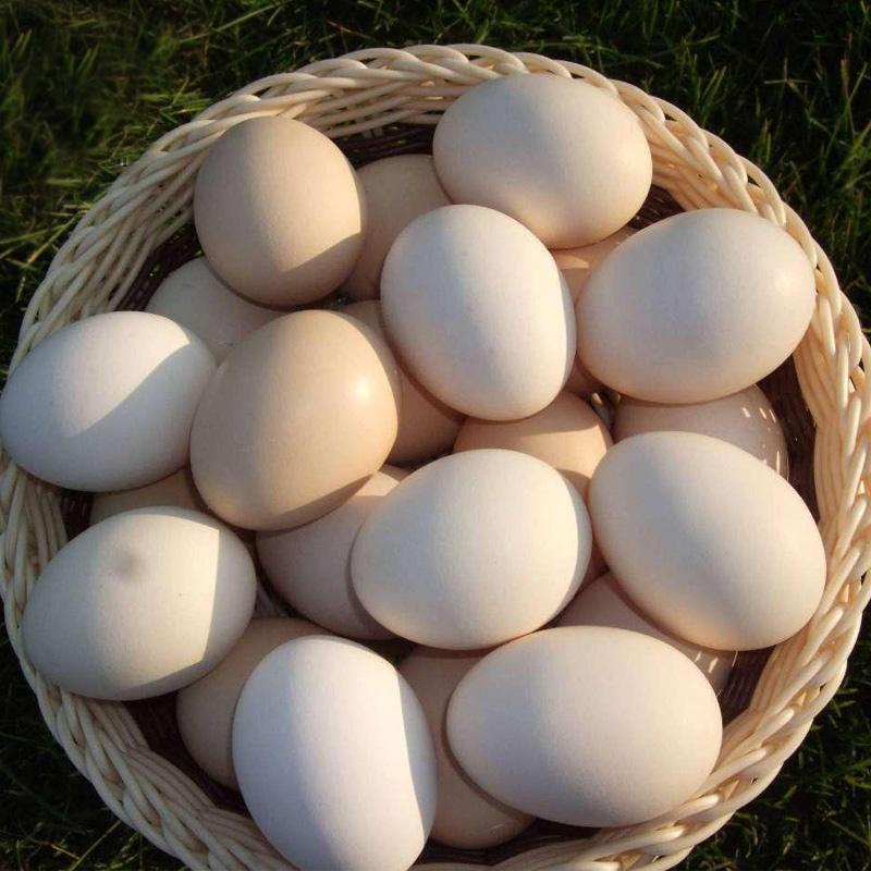 大别山40枚正宗土鸡蛋农家散养新鲜野外柴鸡蛋纯草鸡蛋天然自养笨