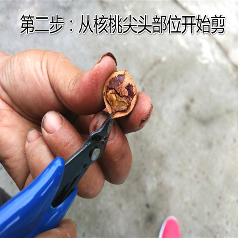 山核桃夹子坚果钳子胡桃夹剥壳器小核桃工具坚果钳包邮