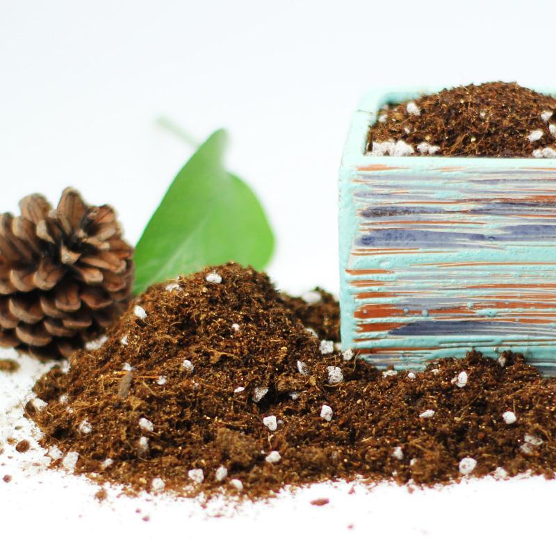 进口营养土泥炭土多肉养花盆栽家用专用种