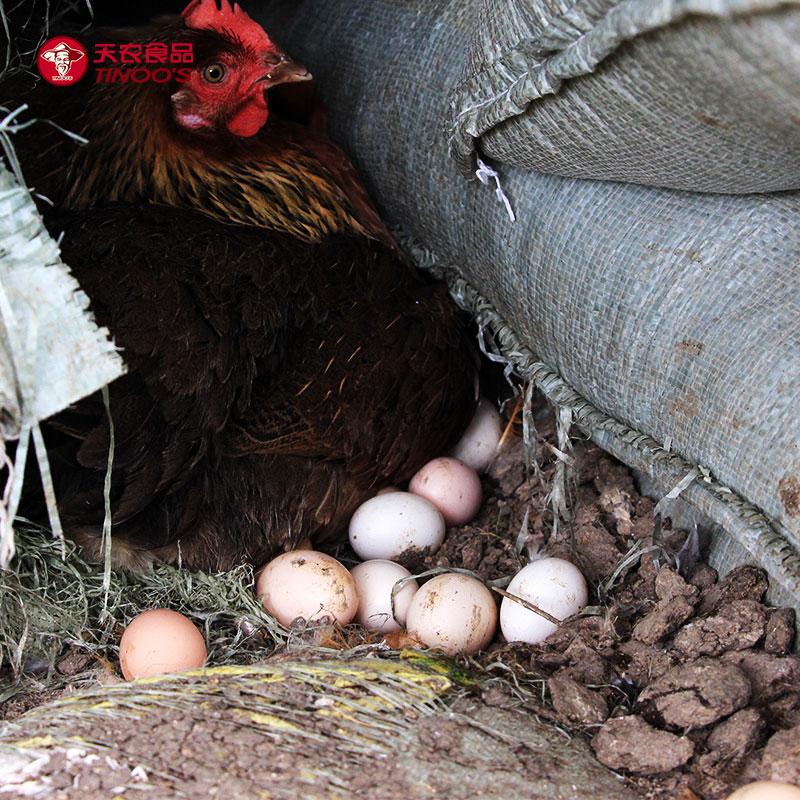 【天农】放养土鸡蛋 清远鸡初生蛋 走地鸡土鸡头窝蛋 24枚